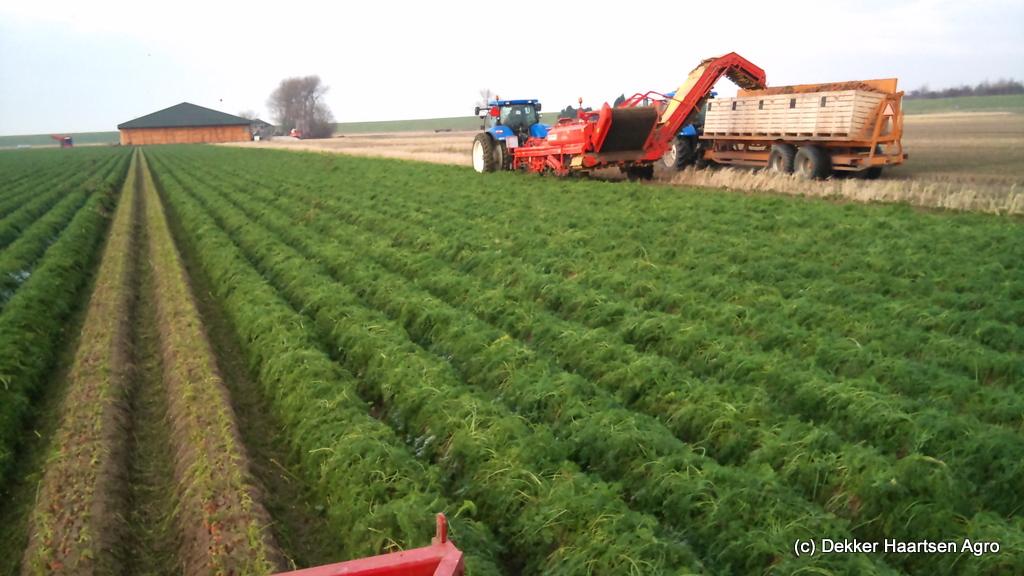 grimme dl 1500 wortelen rooien