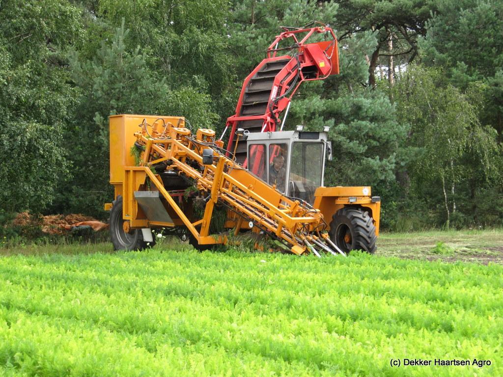 peen oogsten