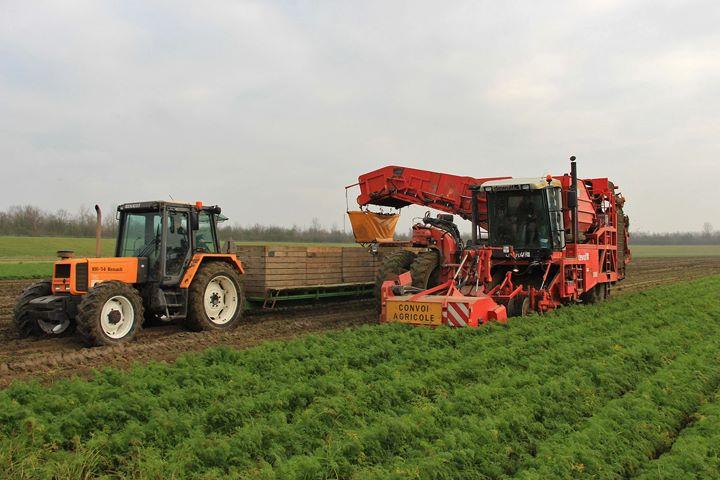 Winterpeen oogst met dewulf Ra3060
